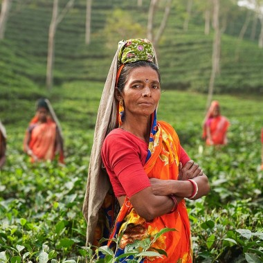Women in Tea: She Works Hard for the Money