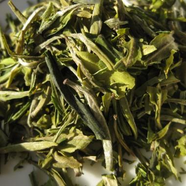 American Tea Room Arya Pearl 2015
